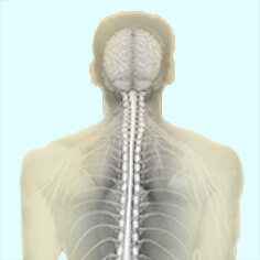 Neurology / Spine